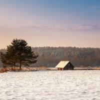 На берегу зимнего моря... :: Александр Никитинский