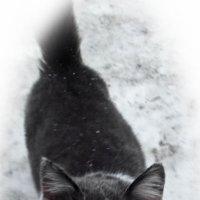Котик :: Юлия Маляренко