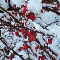 Контрасты зимой :: Светлана Цимбалиста
