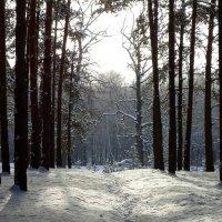 Дремлет лес под сказкой сна :: Ирина Голубева