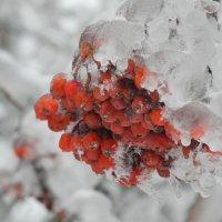 После ледяного дождя :: Александр Яковлев