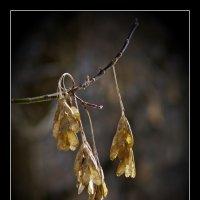 красота увядания :: gribushko грибушко Николай