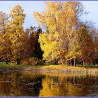 Ломонсов.Парк. :: Владимир Гилясев