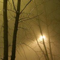 Деревья в тумане :: Игорь Герман