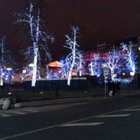 Светящиеся деревья у Большого театра. Новый 2014 год. :: Мила