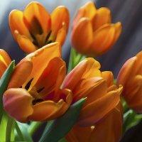 Тюльпаны. :: Лазарева Оксана
