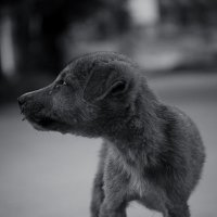 Собаки тоже умеют плакать :: Светлана Фомина