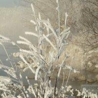 Туман над водой :: Дмитрий Потапкин