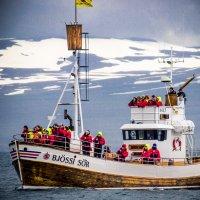Судно по наблюдению за китами. Исландия. :: Вячеслав Ковригин