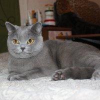 Кошка Соня :: Константин Фотограф