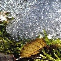серебро весны :: юрий иванов