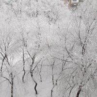 Зима :: Дмитрий Бердник
