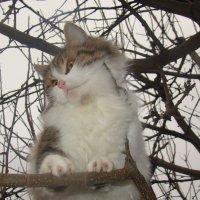 Кот на дереве :: Лилия Бобкова