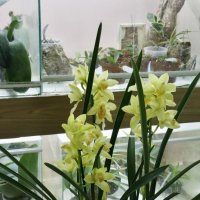 Оранжерея орхидей (1) :: Николай Ефремов