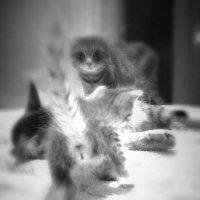 Кошачья семья :: Юлия Филина