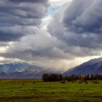 Пасторальная Исландия :: Любовь Белянкина