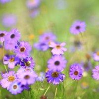 цветы :: Вадим
