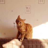 Кот открыл глаза,- Солнце в них попалось. Кот закрыл глаза, - Солнце в них осталось. :: Ольга Кривых