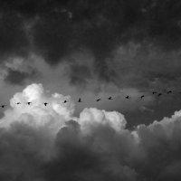Дмитрий Житенёв - С облаками