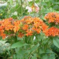 Красные цветы :: Ольга Дувалкина