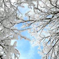 Морозный день :: Анастасия Степанова