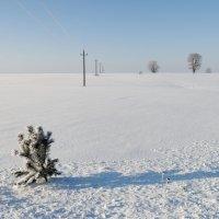 На белом покрывале :: Валерий Шибаев