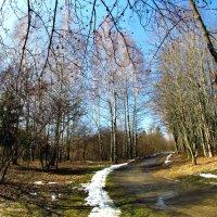 весна идет :: юрий иванов