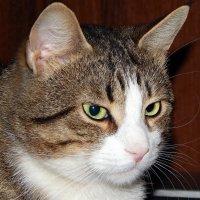 Какой Я серьёзный! :: Виктор Орлов