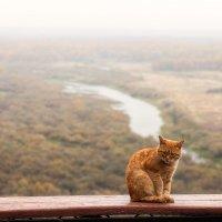 Кот, цвета осени... :: Александр Никитинский