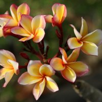 цветики :: Irina Zubkova
