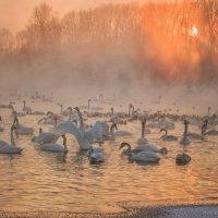 Закат на озере Лебединое. :: Галина Шепелева