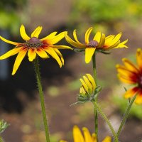 Цветы :: leo yagonen
