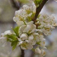 цветы :: Мария Сабирова