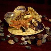 Камешки с разных морей... :: ФотоЛюбка *