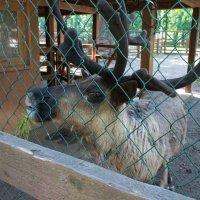 Zoo :: Даниил Ахметов