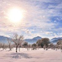 алый снег :: Андрей Гомонов