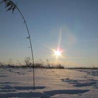 Зимние красоты :: Яна Чепик