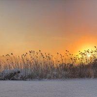 Зимнее утро :: vladimir