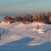 Сосновый бор на берегу Белого моря :: Владимир Шибинский
