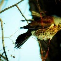 Птица :: Михаил Страхов