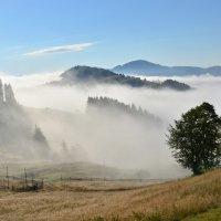 О карпатских туманах... :: Александр Кадькало