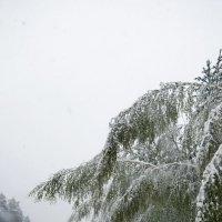 Июньский снег :: Александр Фищев