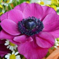цветок :: Natalya Novomlinskaya