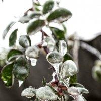 Лёд на листьях :: Максим Цыбак