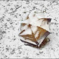 Один под снегом :: Сергей Тарабара