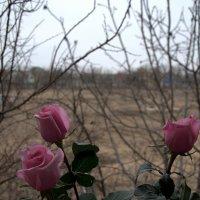 Скрашиваем серость природы... :: ФотоЛюбка *