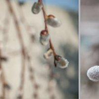 Весна идет... :: надежда корсукова
