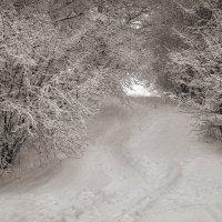 Снегопад в Коломенском...4 :: Андрей Войцехов