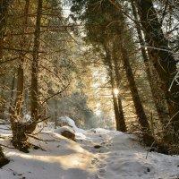 Зимний лес :: Андрей Гомонов