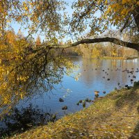 Осень в Гатчине :: Наталья